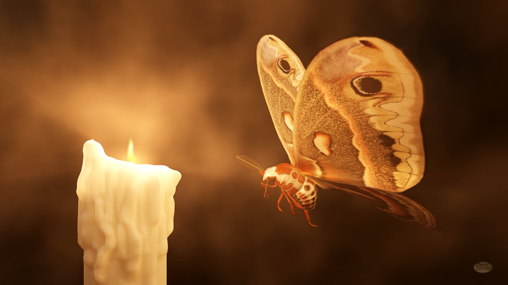 like_a_moth_to_a_flame_by_deskridge-d9r0r35